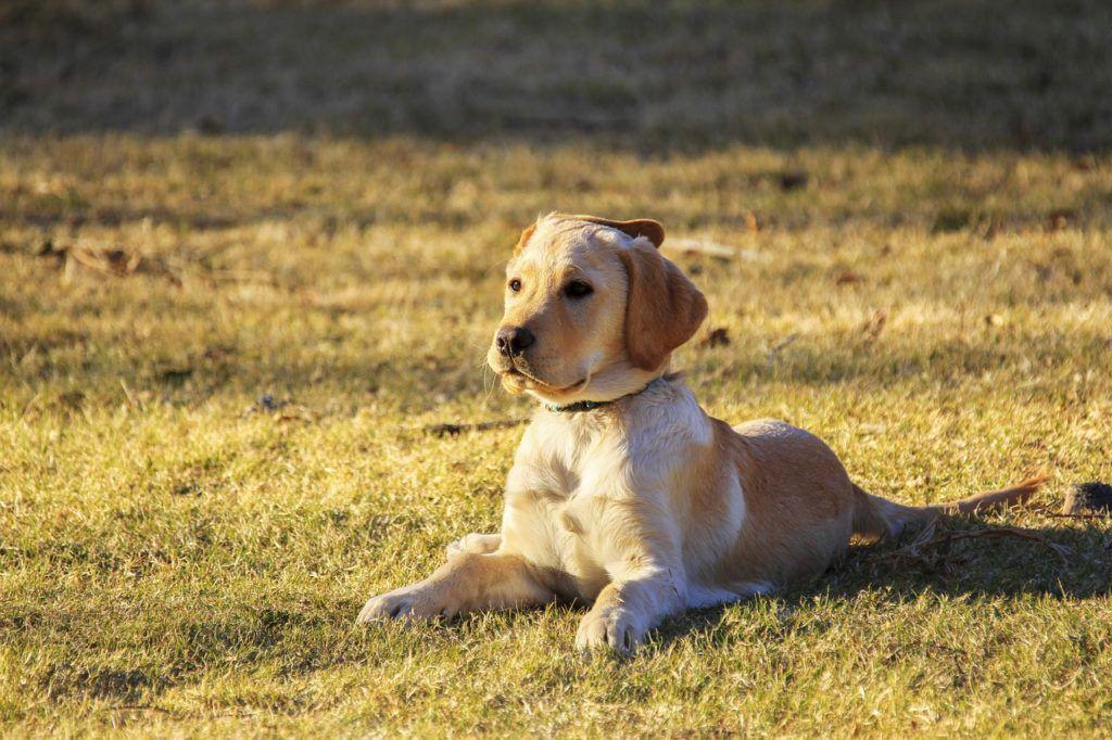 Ranking suchych karma dla psa